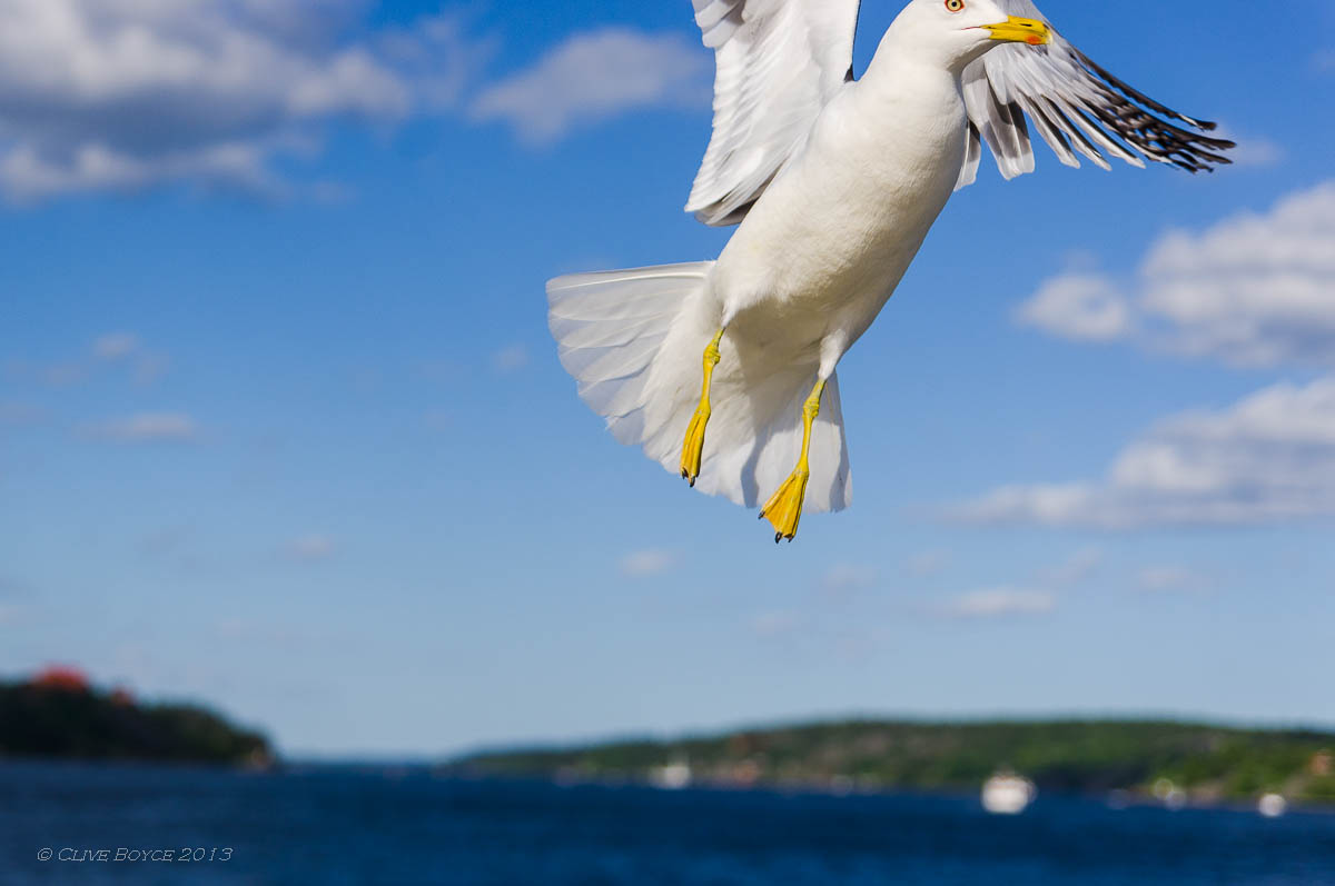 Gull, Fjaderholmarna