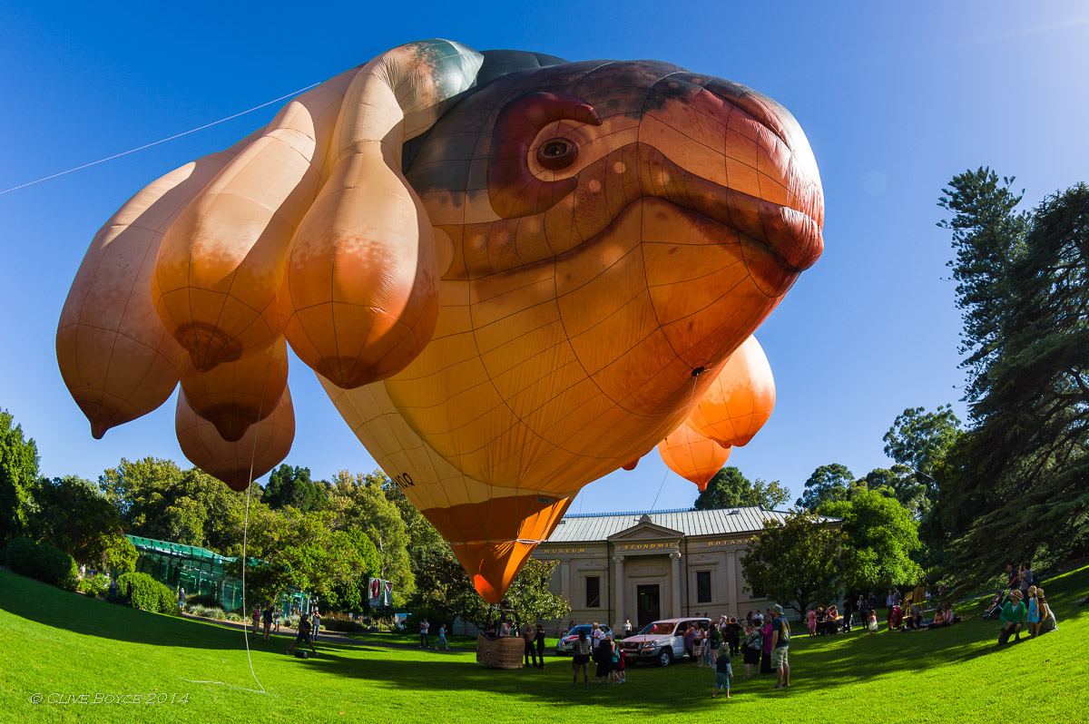 Skywhale in Adelaide