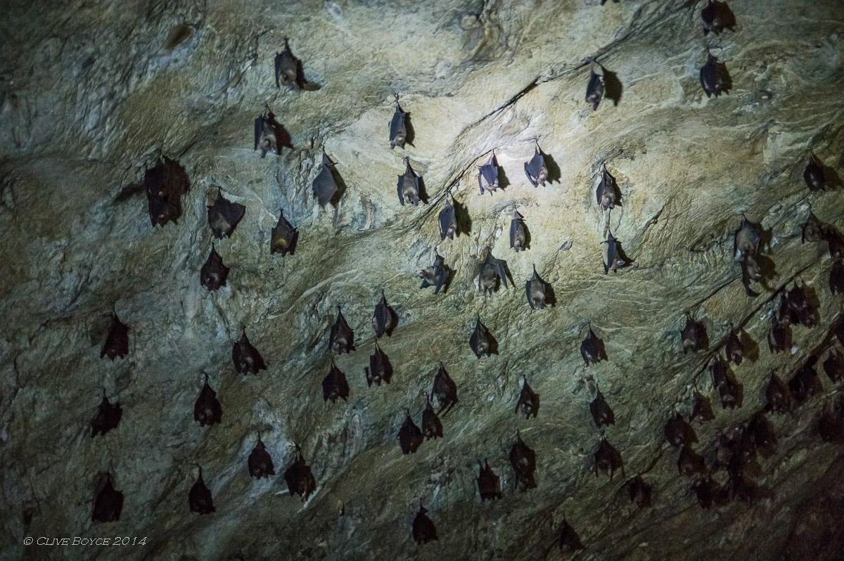 Bat cave, Kilim Karst Geoforest, Langkawi