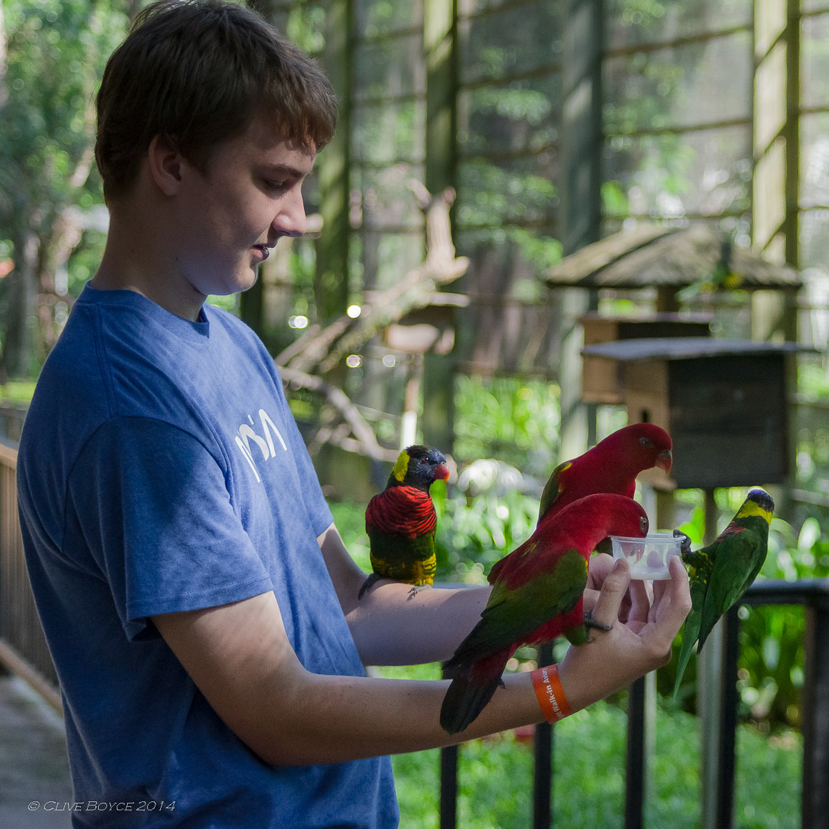 Bird feeding, KL Bird Park