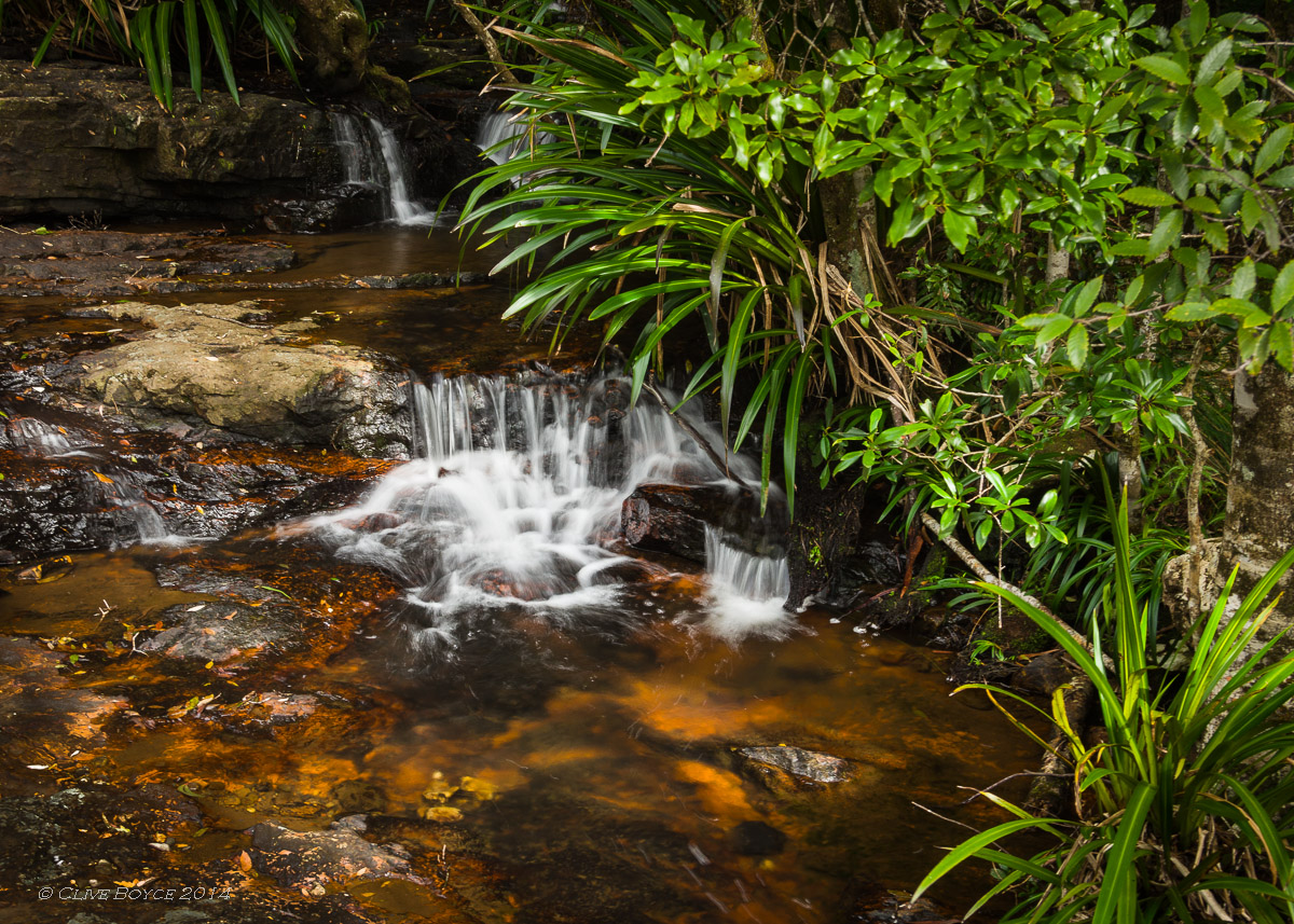 Twin Falls walk, Springbrook National Park.