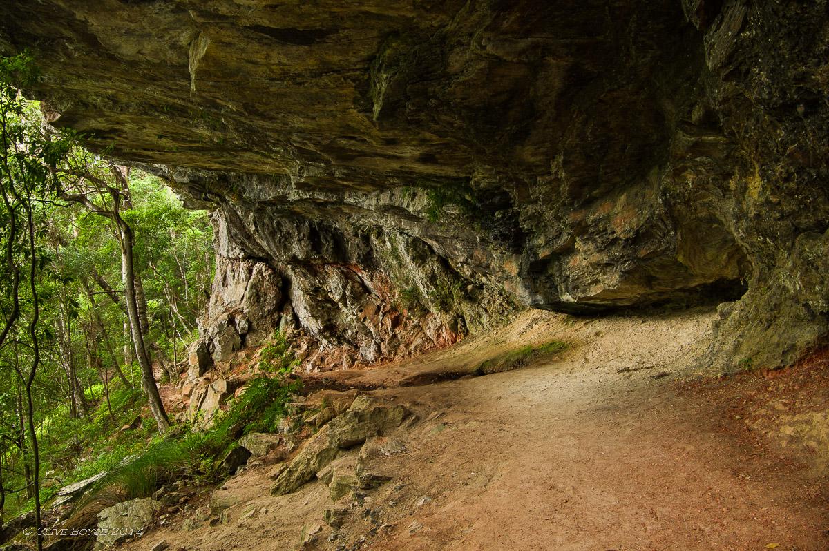 Twin Falls walk, Springbrook National Park